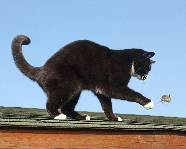 Cách đuổi loài chuột ra khỏi nhà đơn giản