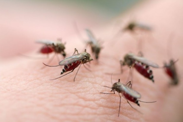 diệt_muỗi