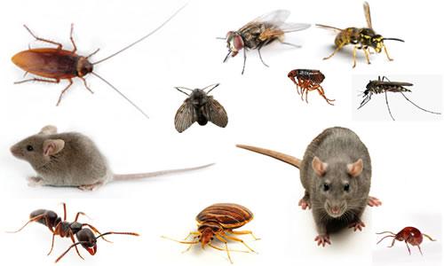 các loại côn trùng gây hại