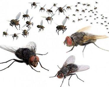 Một trong những nguyên nhân dẫn đến bệnh giun sán là do ruồi