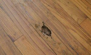 Sàn gỗ bị mối cắn phá