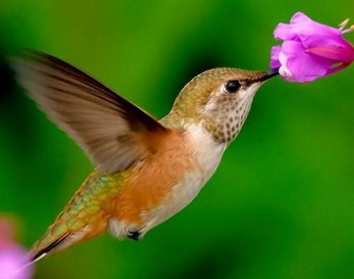 Các cách thụ phần cho hoa trong thế giới tự nhiên