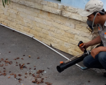 Dịch vụ diệt côn trùng giá rẻ tại Cầu Giấy Hà Nội