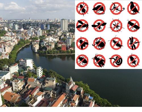 Dịch vụ diệt côn trùng giá rẻ tại quận Ba Đình Hà Nội