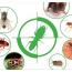 Dịch vụ diệt côn trùng giá rẻ tại quận Bắc Từ Liêm