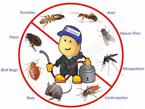 Dịch vụ diệt côn trùng uy tín nhất quận Hai Bà Trưng