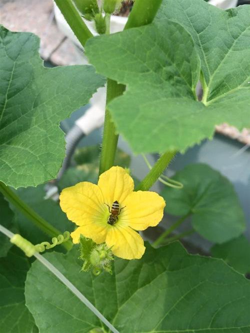 Một số cách thụ phấn cho hoa trong thế giới tự nhiên
