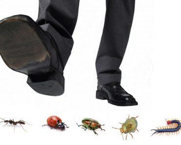 Dịch vụ diệt côn trùng trong nhà uy tín tại quận Long Biên