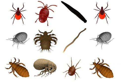 Dịch vụ diệt côn trùng tận gốc tại quận Nam Từ Liêm