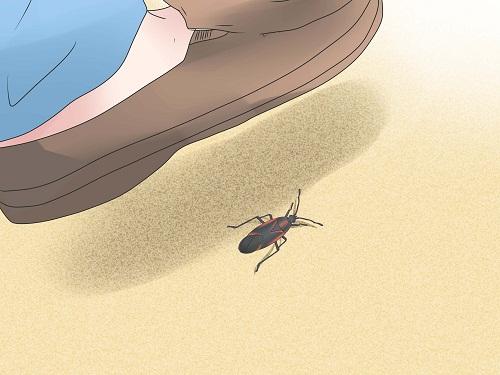 Công ty dịch vụ diệt côn trùng uy tín nhất tại quận Thanh Xuân