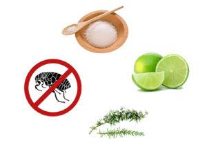 Một số cách diệt bọ chét trong nhà đơn giản, tiết kiệm