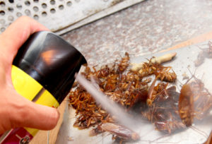 Một số sai lầm khi tự diệt côn trùng tại nhà