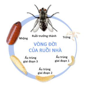 Ruồi- tác nhân truyền bệnh nguy hiểm và một số cách diệt ruồi hiệu quả