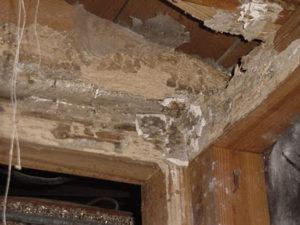 Tại sao cần phòng chống mối trong xây dựng
