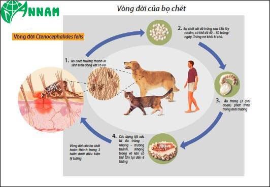 diet-bo-chet-tan-goc-trong-nha