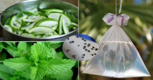 Cách đuổi ruồi cho nhà hàng hiệu quả