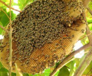 Những loại côn trùng có lợi cần được bảo vệ
