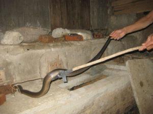 Cách đuổi rắn ra khỏi nhà an toàn, hiệu quả