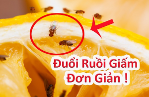 cach-diet-ruoi-giam-trong-nha-ve-sinh