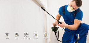 công ty diệt côn trùng tại huyện Gia Lâm