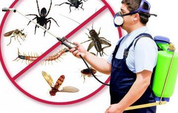 công ty diệt côn trùng tại quận Bắc Từ Liêm