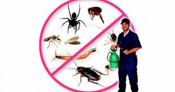 công ty diệt côn trùng tại quận Nam Từ Liêm