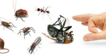 công ty diệt côn trùng tại quận Thanh Xuân