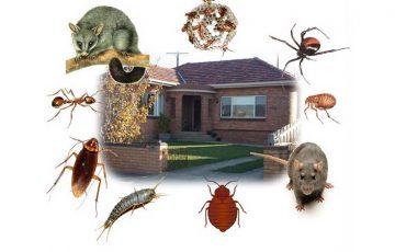 công ty diệt côn trùng tại Đồng Tháp