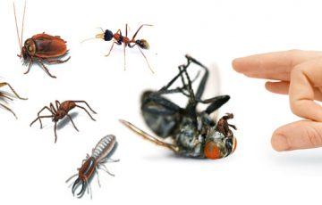 công ty diệt côn trùng tại Khánh Hòa