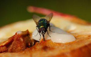 công ty diệt ruồi muỗi tại Hưng Yên