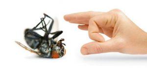 công ty diệt ruồi tại Gia Lai