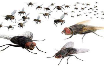 công ty diệt ruồi tại Hòa Bình