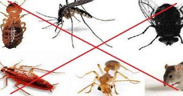 công ty diệt côn trùng tại Nghệ An