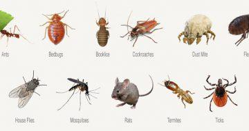 công ty diệt côn trùng tại Sơn La