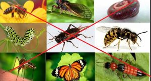 công ty diệt côn trùng tại Thừa Thiên-Huế
