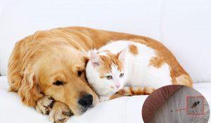 diệt bọ chét rận ở chó mèo