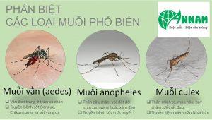 Các loài muỗi gây hại tại Việt Nam