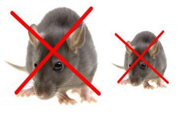 Cách diệt chuột tận gốc