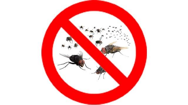 cách dùng thuốc diệt ruồi agita hiệu quả