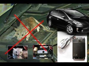 Cách đuổi chuột trong xe ô tô nhanh, an toàn