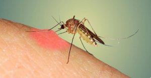 Nốt muỗi đốt