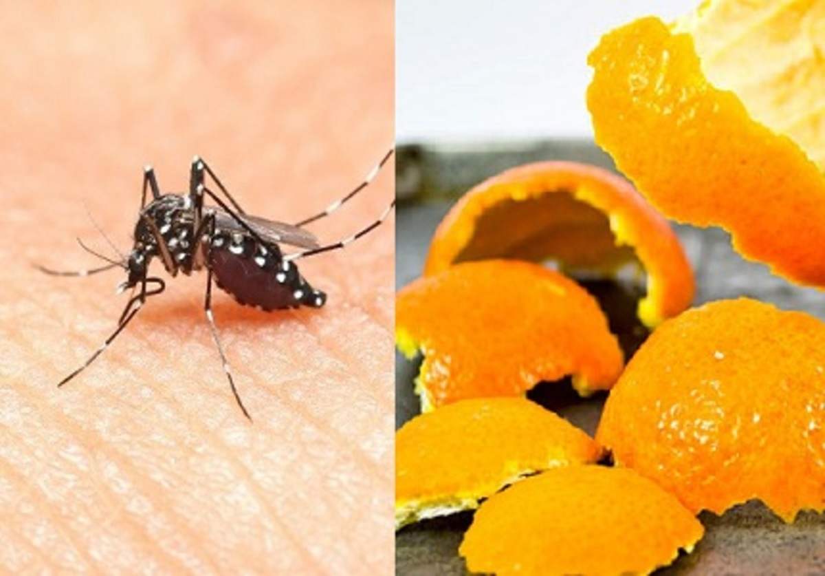 Cách diệt muỗi tận gốc bằng vỏ cam quýt