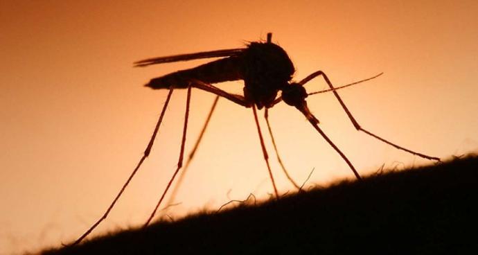 Muỗi sốt xuất huyết đốt khi nào